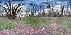 PANO_20160423_134754_0 (boddle (Steve Hart)) Tags: wood wild nature bluebells woodland natural wildlife samsung 360 panoramic anemone galaxy piles streetview stitchwort s6 coppice purplehaze woodlandflowers forestflowers bluebellswoodanemonepilescoppicenaturalnaturewildlifewildsamsunggalaxys6streetviewpanoramic360forestflowerspurplehazewoodlandwoodlandflowers