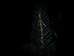 P3225044 (Jeannot Kuenzel) Tags: leica blue sea macro water port photography islands la mediterranean underwater alien under deep scuba diving canarias olympus malta el zen canary supermacro moods asph islas f28 45mm underwaterworld s2000 dg gomera 240z hierro underwaterphotography extrememacro ois jeannot inon macroelmarit underwatercreature kuenzel z240 maltaunderwater underwatermacro underwateralien supermacrophotography ucl165 wwwjk4unet jk4u epl5 maltaunderwatermacro maltaunderwaterphotography bestmaltaunderwaterpictures maltamacro maltascubadiving underwatersupermacro jeannotkuenzel aliensofthedeepblue superextrememacro aliensofthesea