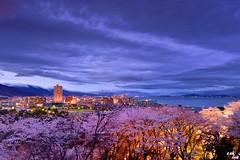 (Clonedbird  & Iris ) Tags: sunset japan nikon kyoto    sakura     2016     kansi   d810