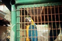 confinement (chenb.reyes) Tags: las film lomo lomography casas bataan