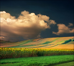 Summer dusk (Katarina 2353) Tags: sunset summer film landscape nikon fields katarinastefanovic katarina2353