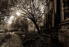 Souvenir d'une belle journe d'automne (Guillaume DELEBARRE (Guigui-Lille)) Tags: autumn blackandwhite bw sun france church monochrome sepia backlight canon square noiretblanc path au fullframe lille parc 1740 contrejour nord canon1740l ef1740l pleinformat