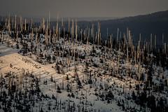 _MAK4843_2016_02_27_1-640 Sek. bei f - 5,6_300 mm_ISO 320 (Markus Kolar braucht kein Photoshop...aber Licht) Tags: schnee nationalpark landschaft wandern bayerischerwald 2016 lusen fotoblosn httpmarkuskolarblogspotde pentaxks2