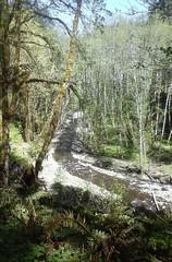 tillamookhike10 (jcravens) Tags: oregon forest hike campground galescreek stateforest tillamookforest