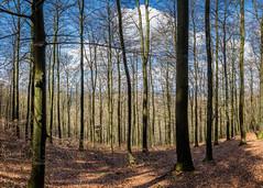 Im Sauerlnder Wald #1 (USpecks_Photography) Tags: sauerland sonnenweg