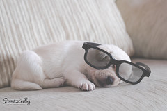 Puppy Vision (Stuart Ashley Photography) Tags: dog cute dogs animal animals puppy glasses puppies sweet pup awwwww