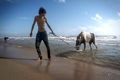 Horse at Seashore... (aestheticsguy2004) Tags: sea people horse seascape water landscape nikon ngc sunny bluesky shore marinabeach seashore thirsty sunnyday twop manwithhorse chennaibeach travelsouthindia horsewater nikond750 neeteshphotography neeteshpics