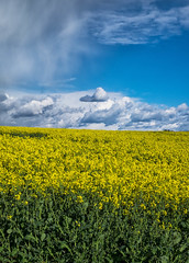 Oilseed rape and clouds, Wiltshire (tonybill) Tags: places crops wiltshire miscellaneous oilseedrape fujinonxf35mmf14 fujifilmxe2