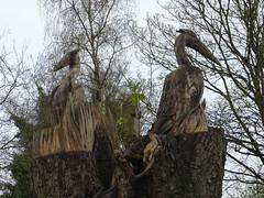 Tree Sculpture (Thomas Kelly 48) Tags: lumix panasonic herons treesculpture prestbury fz150