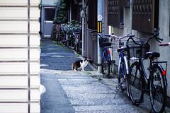 Today's Cat@2016-04-25 (masatsu) Tags: cat pentax osaka cc100 catspotting mx1 thebiggestgroupwithonlycats