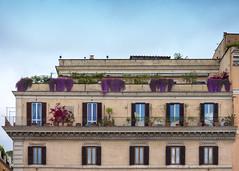 Terrazze di Roma (Fiorry) Tags: rome roma fiori piante romana spqr terrazza romane terrazze attico attici fiorite