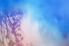 blur-dreamy-texture-texturepalace-89 (texturepalace) Tags: blur color leaves cc creativecommons dreamtextures texturepalace blurtextures