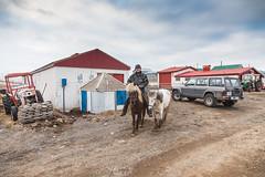 Þarfasti þjóninn - the most useful server (Riverman - Armann) Tags: island iceland patrol ísland lilli akureyri tracktor eyjafjörður dráttarvél 2016 breiðholt hestar hestur björgvin riverman jebbi