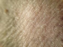 FullSizeRender (39) (sswartz) Tags: abstract macro closeup flesh skin wrinkles
