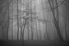 naked (Mindaugas Buivydas) Tags: morning trees bw mist tree fog dark march morninglight spring mood moody klaipeda lithuania darkforest lietuva klaipda sadnature