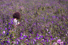 _chasse aux papillons (nicole boxberger) Tags: fleurs papillon lin