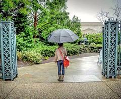 Every Adventure Leads to Love (AngelBeil) Tags: love rain washingtondc dc washington amor adventure sculpturegarden umbrellas nationalarchives notatourist