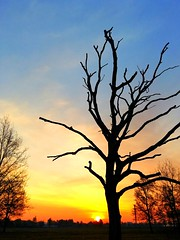 Early mornig view (Tobi_2008) Tags: sky sun tree nature sunrise germany landscape deutschland soleil saxony natur himmel ciel sachsen landschaft sonne sonnenaufgang allemagne baum germania supershot