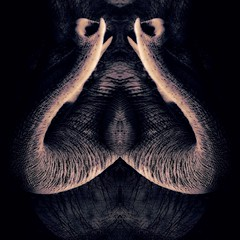 n o s t r i d a m o s (epiclectic) Tags: reflection animal photoshop mirror design graphic wildlife humor perspective manipulation images symmetry reflect symmetrical mutant twisted enhancement epiclecticcom epiflection epiflectionbyepiclecticcom