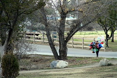 Untitled (robbymack24) Tags: road park balloons walking toys living sad stuffedanimals cottoncandy lonely peddler sell sorrow selling provide providing walkingalone givingup makingaliving solicitation giveup solicitor peddling makealiving tryingtoprovide