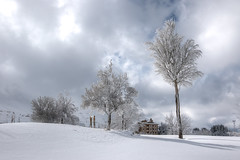 a frozen way. (jrseikaly) Tags: winter lebanon snow tree jack photography frozen high dynamic range arz hdr cedars seikaly jrseikaly