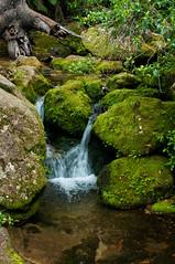 Coastal track (MaryzLemieux) Tags: newzealand nationalpark hiking solo abel tasman greatwalks