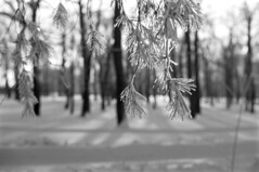Frost (MZ163) Tags: street winter bw snow nature frost russia fujiacros leicar4
