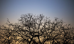 Ways... (Luca Rohmann) Tags: blue winter sky color tree yellow canon lens l usm 70200 ways f4 6d 200mm