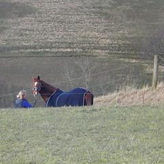 (Landanna) Tags: horse rural denmark countryside farmland dnemark danmark als hest denemarken paard snderjylland nordborg zuidjutland