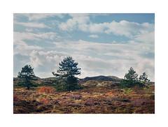 Schoorlse duinen Netherlands (Bert Vliegen) Tags: autumn trees netherlands dunes nederland kodakektachromee100vs schoorlseduinen howtekd4000 chamonix045n2 schneiderapo240mm