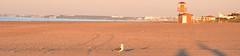 Playa de Punta Umbra en un amanecer de invierno (rgago22) Tags: naturaleza seagull huelva playa gaviota puntaumbra