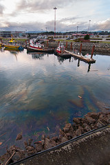 Not the Good Kind of Rainbow (C McCann) Tags: ocean canada water point rainbow bc pacific diesel britishcolumbia victoria vancouverisland pt spill ogden breakwater petrochemicals
