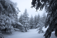 in the wild. (jrseikaly) Tags: trees winter lebanon white snow forest canon jack photography cedar 7d arz cedars seikaly jrseikaly