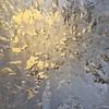 Sunburst (iPhone image) (PJD-DigiPic) Tags: sun yellow sunrise sunburst icy frostywindow iphoneimage pjddigipic