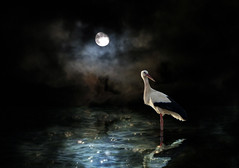 IMG_6246+7523a1 Requiem for a dream (pinktigger) Tags: stork reflection moon clouds night water bird photoshop dark ~themagicofcolours~xi