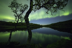 """Dreamworld"" (Ronny rbekk - http://arcticphotography.no) Tags: nightphotography tree water norway night canon reflections landscape norge fotograf wide norwegen september arctic norwegian aurora ultrawide nordnorge northernlights auroraborealis harstad troms norsk nordlys norrsken authumn samyang canonphotography northernnorway flickrsbest specland canonphoto norwegianphotographer visipix  ronnyrbekkphotography ronnyrbekk"