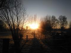 Sonnenaufgang in den Niederrheinauen (Frilein Allerlei) Tags: sunset urban sol sonnenaufgang niederrhein pas salidadelsol lndlich landstrase landidylle sunsetinthemorning niederrheinaue