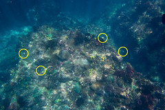 21408758551_1dc10a2033_o (d3_plus) Tags: sea sky fish beach japan scenery underwater diving snorkeling  shizuoka    apnea izu j4  waterproofcase    skindiving minamiizu       nikon1 hirizo  1030mm  nakagi 1  nikon1j4 1nikkorvr1030mmf3556pdzoom beachhirizo misakafishingport  1030mmpd nikonwpn3 wpn3