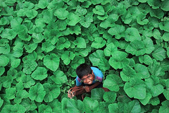 img (mebipra) Tags: india tree green canon children shoot village child play farm earlymorning land 1855 kolkata westbengal 1200d rebelt5