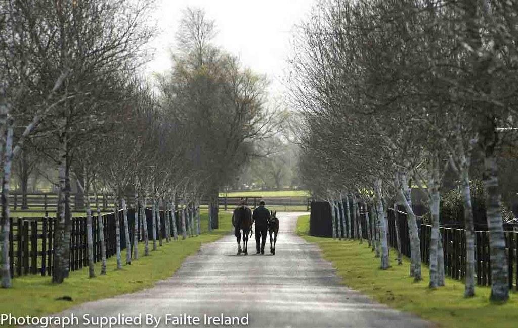 Kildare, County Kildare - Irish National Stud