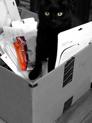 WHY ARE ALL MAH TPS REPORTS IN THE RECYCLING BIN 🐈