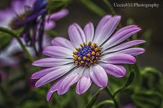It's Springtime (Uccio81 ) Tags: b its sony 11 sp ob mm tamron 90 springtime fotocamera dslra580