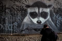 Waschbr und Workshopteilnehmer (S. Ruehlow) Tags: graffiti frankfurt graffito brcke westhafen waschbr friedensbrcke gutleut gutleutviertel westhafengebiet