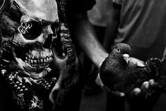 #03 Stark Realities (arkamitra roy) Tags: street blackandwhite bw india bird monochrome dark death skull asia noir pigeon highcontrast tshirt macabre juxtaposition allegory kolkata calcutta
