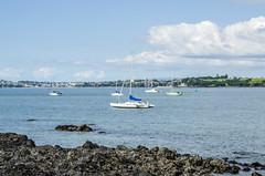 Boats off the coast of Devonpirt (firstfire53) Tags: newzealand devonport