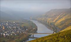 MOEZEL 01F (BAUWENS RENE) Tags: automne germany deutschland nikon wine couleurs herbst herfst d750 vin vignoble duitsland mosel wein farben wijn wijngaard kleuren trittenheim moezel