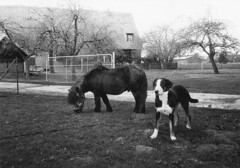 Eintracht (Turikan) Tags: horses dog nature stand mju farm grain olympus hund dev 400 ponies rodinal pferde unexpected bauernhof westfalen fomapan