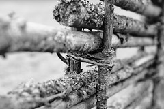 gardsgard (fence) (m.rsjoberg) Tags: old bw white black monochrome canon fence 50mm grdsgrd sv vitt svart gammal staket vit svartvitt grsgrd 70d vikarbyn grdesgrd fotosondag fotosndag fs160410
