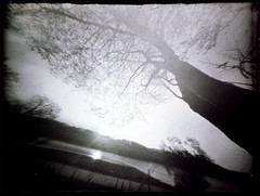 Tree by the river (batuda) Tags: tree landscape spring branches pinhole d76 cardboardbox kaunas wildplum wppd glassplate nemunas aniai wppd2016