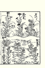 Top  fringed pink, thistle and China pink; Bottom  meadow fleabane, rose balsam, pot marigold and grass-leaf sweet-flag (Japanese Flower and Bird Art) Tags: china pink flower art rose japan japanese book thistle picture meadow pot fringed dianthus marigold cirsium asteraceae impatiens woodblock balsam calendula chinensis superbus ukiyo britannica caryophyllaceae officinalis fleabane acorus balsaminaceae sweetflag kikuya gramineus inula grassleaf acoraceae readercollection balsaminea shichirobei
